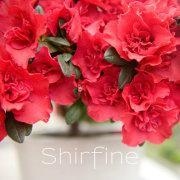 Shirfine